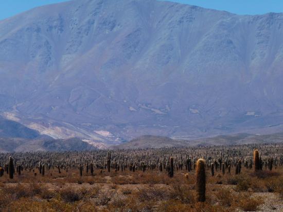 foret de cactus