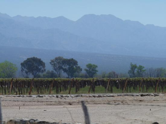 vignes vers cafayate