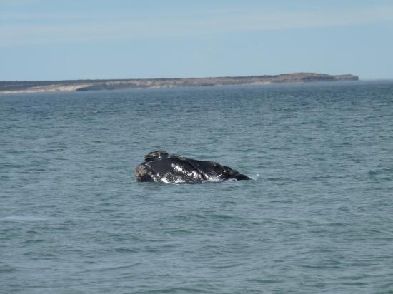 une baleine tout prêt