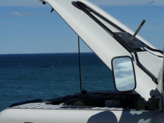 le land avec les baleines