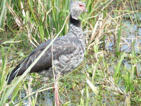 oiseau à Ibera