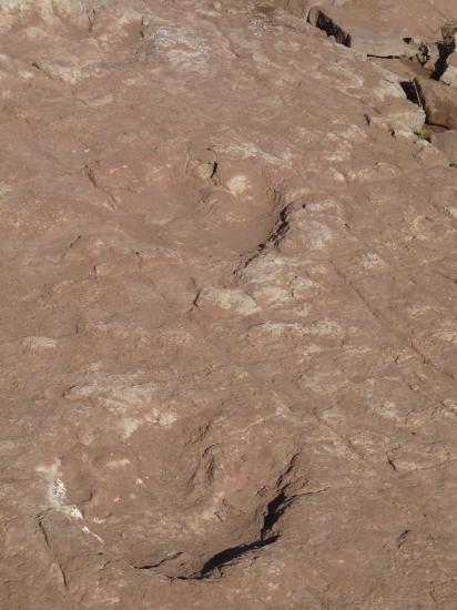 traces de giganotosaurus
