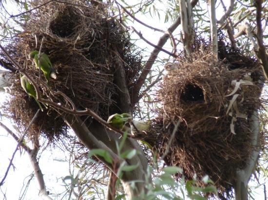 perroquets dans leurs nids